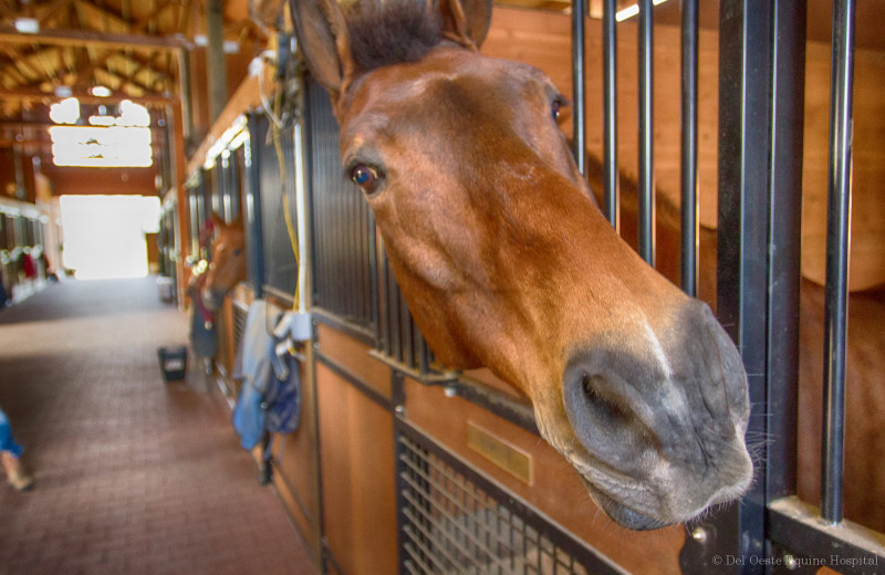 funny view of horse in stall