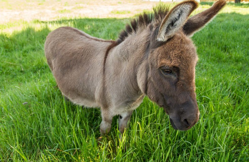 donkey in tall grass