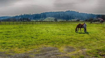 horse and handler in pasture