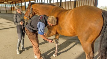 Del Oeste Equine Hospital - Equine Veterinary Service