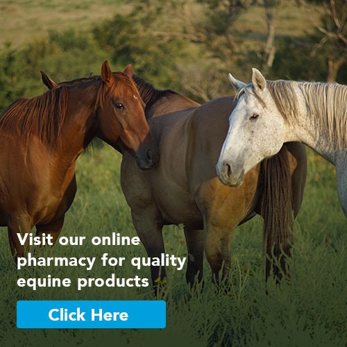 Click here for our online pharmacy for quality equine products